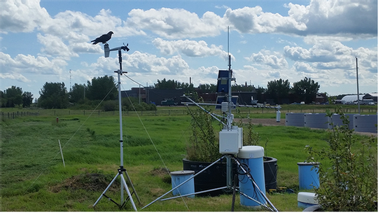 bird-on-weather-station