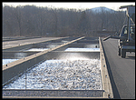new jersey: pequest trout hatchery