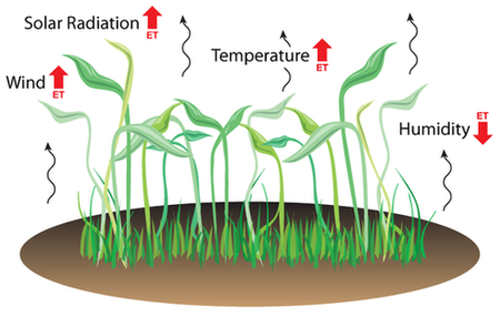 Effects of solar radiation, wind, temperature, and humidity on evapotranspiration